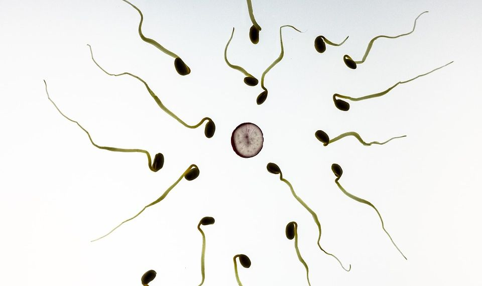 Men Possess Better Sperm Quality during Ejaculation With New Women
