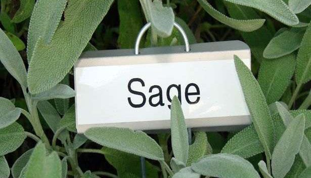 Home Remedies for Foot Odor with Sage